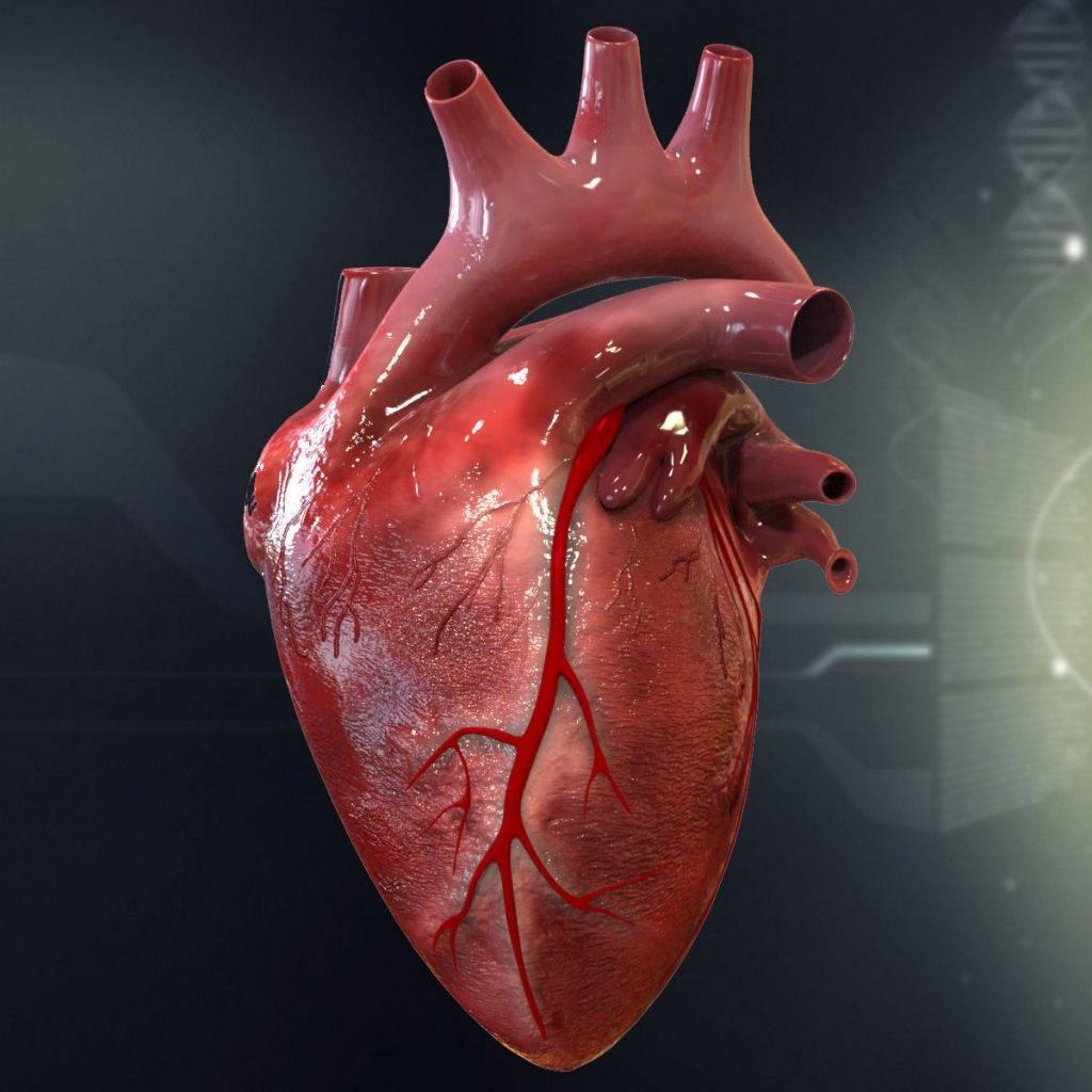 بهترین راه پیشگیری از بیماریهای قلبی، دکتر قلب، دکتر حمید رضا صنعتی، متخصص و فوق تخصص قلب و عروق تهران، آنژیوپلاستی