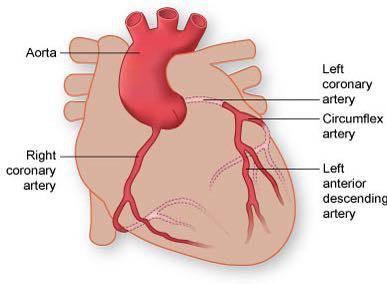 عروق کرونر-چاقی حفظ وزن مناسب بهترین راه پیشگیری از بیماریهای قلبی، دکتر قلب، دکتر حمید رضا صنعتی، متخصص و فوق تخصص قلب و عروق تهران، آنژیوپلاستی