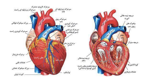 آنژيوپلاستي، تعويض دريچه آئورت، تعويض دريچه آئورت از راه پوست,تنگي دريچه آئورت,بهترین متخصص و فوق تخصص و دکتر قلب و عروق خوب تهران جراحی قلب آنژیوپلاستی,گرفتگی عروق کرونر,سکتههای قلبی,پرفشاری خون,بیماریهای دریچهای قلب,تنگی دریچه میترال و آئورت,نارسایی دریچهی میترال,بیماریهای آئورت و عروق محیطی,بیماریهای مادرزادی قلب, آنژیوگرافی عروق کرونر,آنژیوپلاستی عروق کرونر (بالون آنژیوپلاستی و استنتگذاری),آنژیوپلاستی عروق محیطی,باز کردن دریچهی میترال با بالون,تعویض دریچهی آئورت از راه پوست,بستن گوشک دهلیز چپ,ترمیم نقصهای مادرزادی قلب